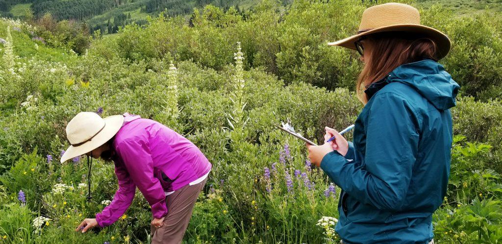 REU scholar working on native pollinators in Colorado.