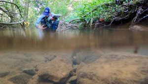 Studying aquatic ecology in the rivers of North Carolina.